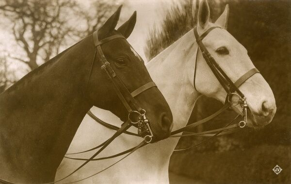 Pair of Show Horses or Hunters Date: circa 1910s
