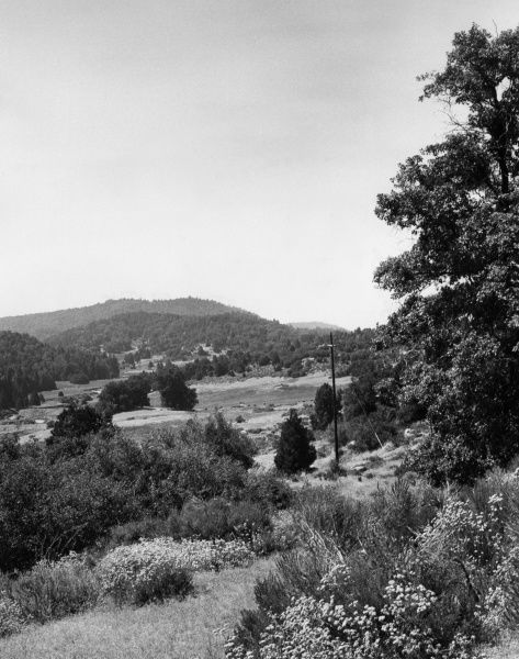 Palomar State Park, southern California, U.S.A. Date: late 1960s