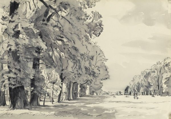 A row of mature trees in a public park. Pencil and wash sketch by Raymond Sheppard