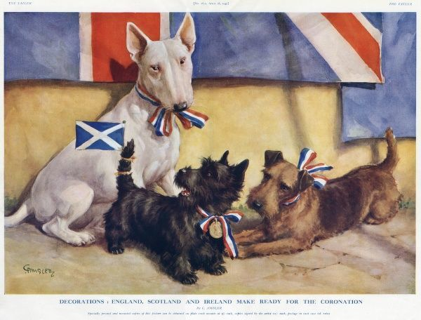 An English Bull Terrier, a Scottish terrier and an Irish terrier make ready for the Coronation as canine representatives of England, Ireland and Scotland