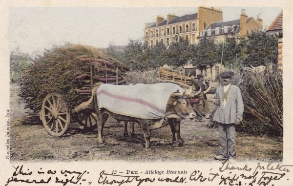 A Farmer with his laden Ox Wagon at Pau, France, close to the border with Spain and the Pyrenees Mountains. Date: circa 1910s