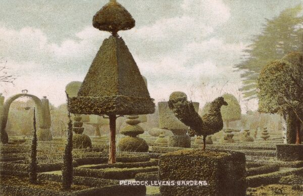 A variety of topiary (including a peaock) at Levens, Hal, Garden, Lake District, England Date: 1908