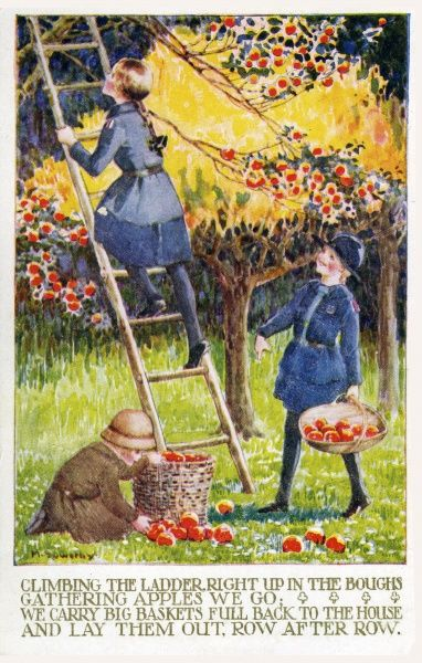 Two girl guides and a brownie lend a hand by picking apples in a picturesque orchard