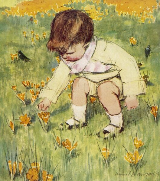A little boy bends down in a spring meadow to pick a yellow crocus