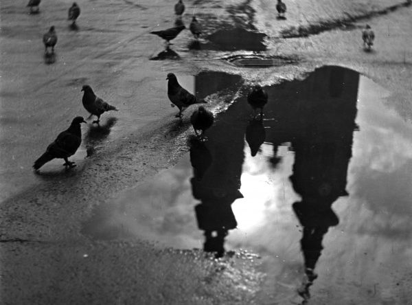 Pigeons and towers reflected in puddles in Budapest, Hungary. Date: 1930s