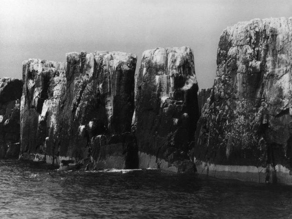The Pinnacles, Farne Islands, off the coast of Northumberland, England, home to thousands of sea birds during the mating season. Date: 1930s
