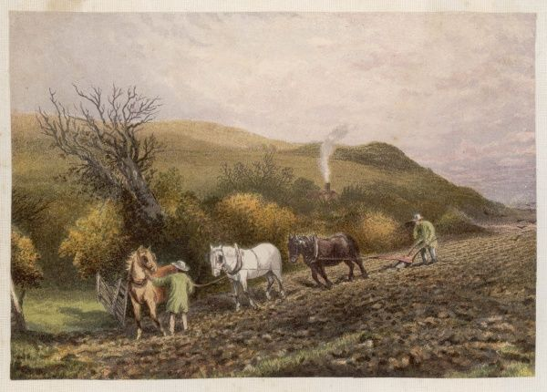 Ploughing with three horses in the English countryside