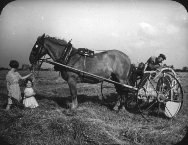 Ploughing by traditional methods, with one large carthorse