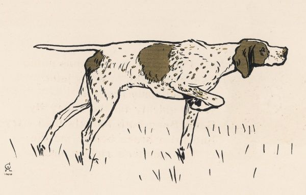 Old Ponto, the pointer
