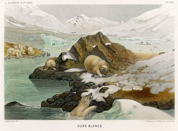 A group of polar bears in an icy landscape. One has caught a fish and is warning the others off with a fierce growl. Date: 1865