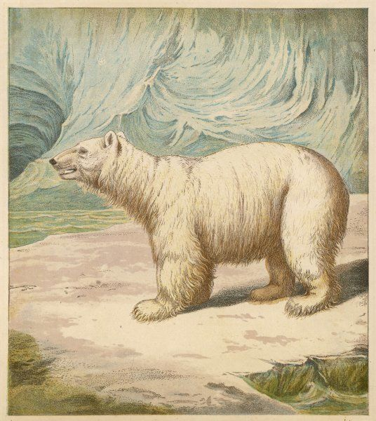 A polar bear stands in an icy setting