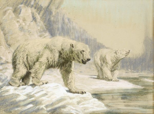 Two Polar bears on the Arctic ice. Pastel drawing by Raymond Sheppard