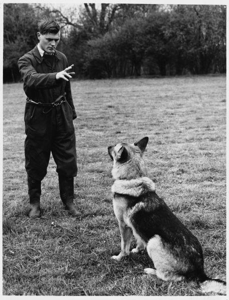 A Metropolitan Police dog handler giving his dog obedience training