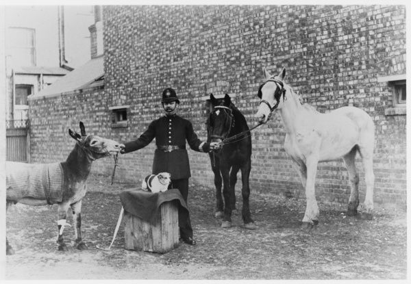 Metropolitan Police officer with horses, a donkey and a dog. PC Cole - prosecuted about a thousand cruelty to animals cases and he bacame known as 'The Animal's Friend&#39