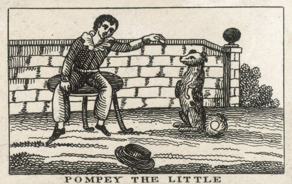 Pompey the Little, the eponymous hero of the book The History of Pompey the Little; or, the Life and Adventures of a Lap-Dog, by Francis Coventry, first published 1751