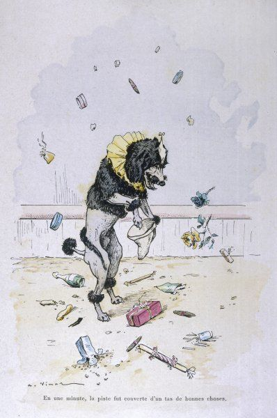 Performing dog collects presents thrown into the Circus ring