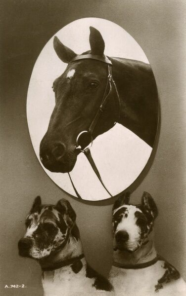 Portrait of a horse (wearng a simple snaffle) and two Great Danes Date: circa 1910s