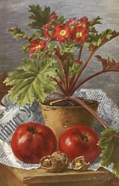 A Geman (from Munich) painting of a pot of Red Primula Polyanthus (Primrose) variety flowers, two shiny apples and a large broken walnut Date: 1904