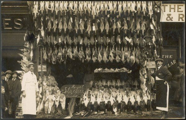 A fine pre-Christmas display by a poulterer / fishmonger of Basingstoke, Hampshire : mostly of poultry, but also a royal sturgeon and advertising for T Wall's Sausages