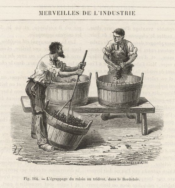 In Bordeaux, France at this time they crushed grapes by hand using a long handled tool with 3 spokes (possibly like a potato masher) to extract the juice