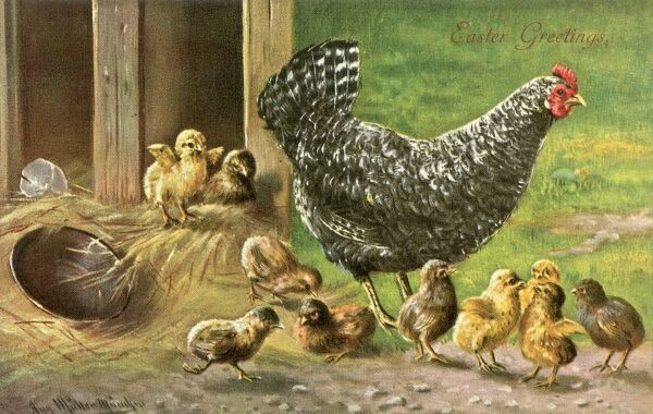A black speckled hen and her chicks on an Easter postcard