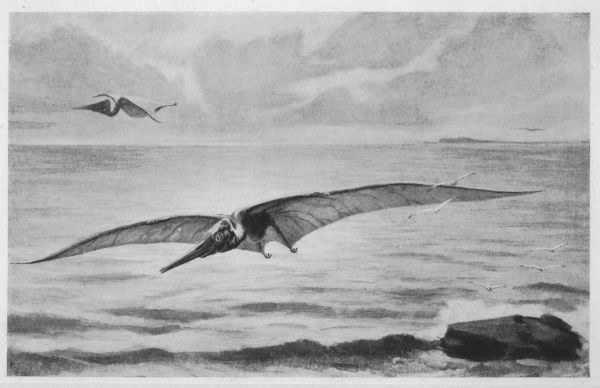 Giant pterodactyl, the PTERANODON, with a wing-spread of some 6 metres from the Cretaceous period