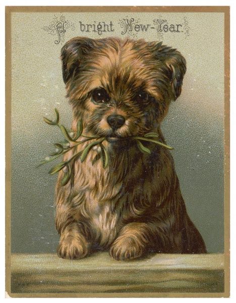 A puppy holds a sprig of mistletoe in its mouth