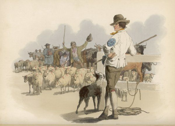 A SMITHFIELD DROVER Vast numbers of sheep and cattle are needed to feed the people of London, and Smithfield Market is where they are bought and sold