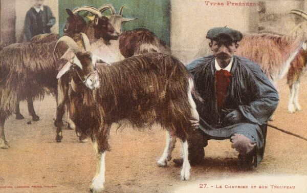 Pyrenean Goat Shepherd and his Flock. He certainly seems to have a hand on the situation... Date: circa 1910s