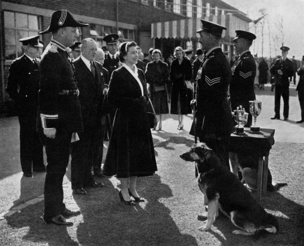 It is claimed that this visit was the first time that the reigning monarch has visited a provincial police headquarters. The Queen is speaking to Seargeant C. Williams, one of the sergeants in charge of police dogs at the County Police H.Q. at Hutton