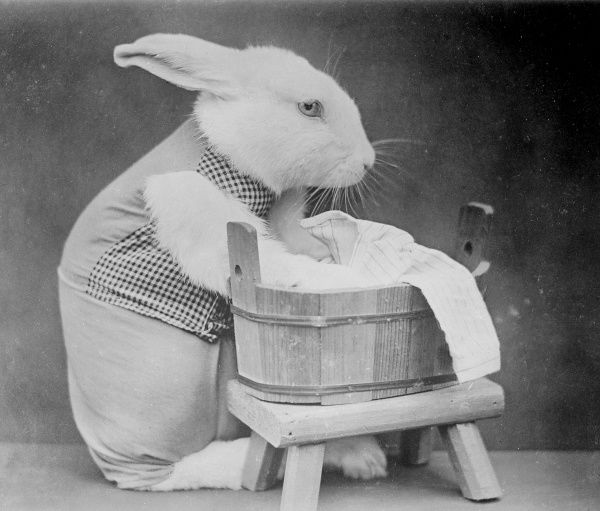 A rabbit washing laundry by hand in a wooden tub. Date: early 1930s