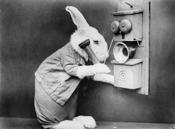 A clever rabbit makes a telephone call on his new- fangled phone! Date: early 1930s
