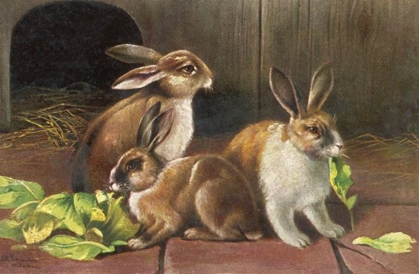 Three brown and white domestic rabbits eating green leaves