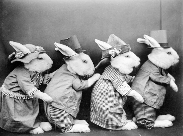 A row of rabbits in smart outfits and hats. Date: early 1930s