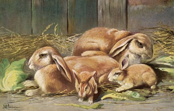 Brown domestic rabbits with their young