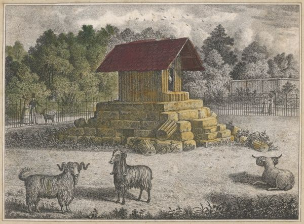 The Goat House is picturesquely perched on a stack of stones which may remind the goats of the Alps where they are wont to gambol and cavort
