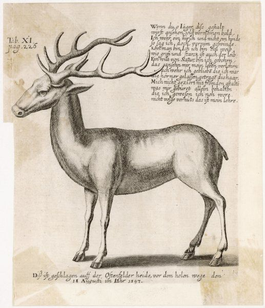 A German depiction with notes on hunting - in Germany, the reindeer is a creature to be hunted, rather than bred for its attributes as in Lapland