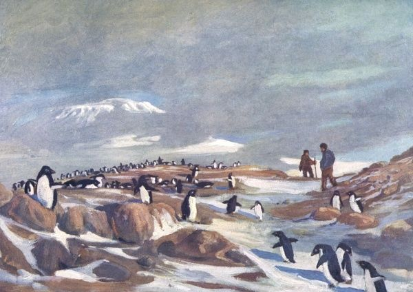 The penguins return in the spring. Date: 1907 - 1909