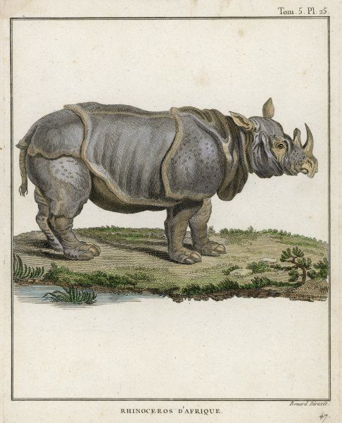 A fine early engraving of an African rhinoceros. Date: 18th century