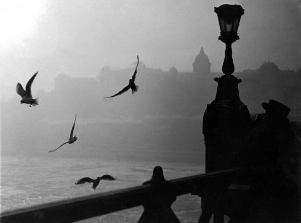 Gulls over the River Danube at Budapest, Hungary. Date: 1930s