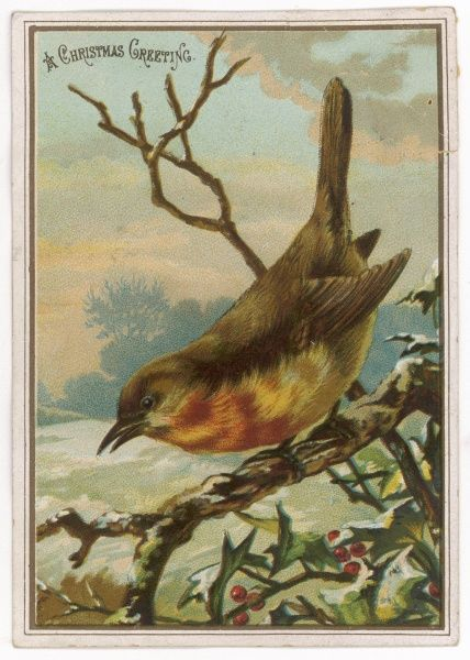 A robin on a wintry bough