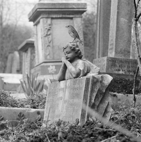 A robin perched on the sculpture of a child leaning on an open book, on the grave of Antony David Hellyer (d.1939) and Maude Maria Hellyer in the west cemetery Highgate Cemetery, Hampstead, London