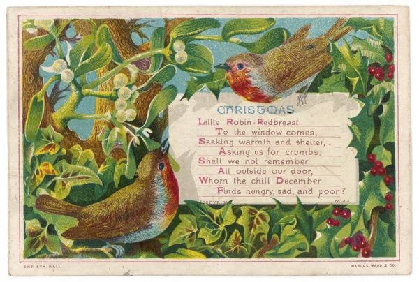 Two robins in a setting of holly and mistletoe