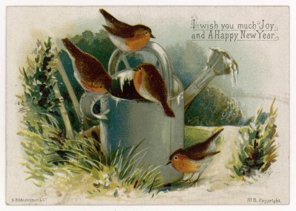 Four robins round a frozen watering can