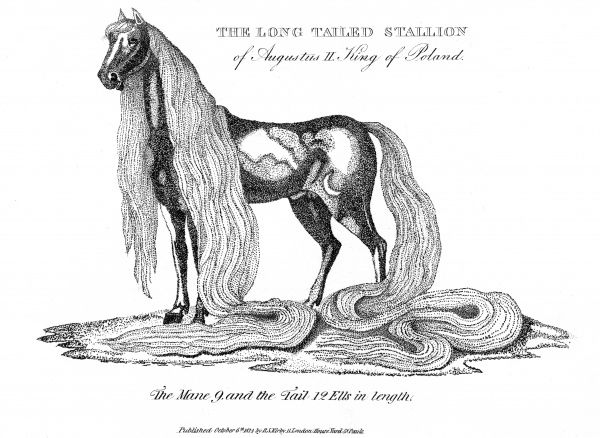 The long tailed stallion of Augustus II King of Poland. Date: 1814