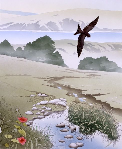 A pretty rural scene with a swallow swooping above a stream, with red poppies in the foreground and a lake and mountains in the background
