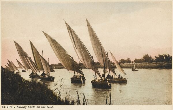 The distinctive wedge-shaped sails of Dhows and Feluccas on the River Nile, Egypt