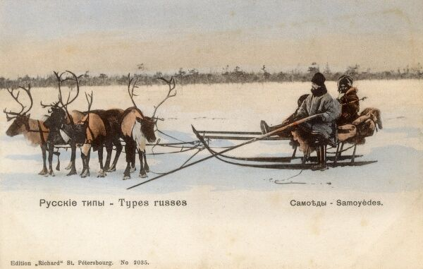 Two Samoyedic hunters on a sleigh pulled by reindeer at, northern Russia. Date: circa 1903