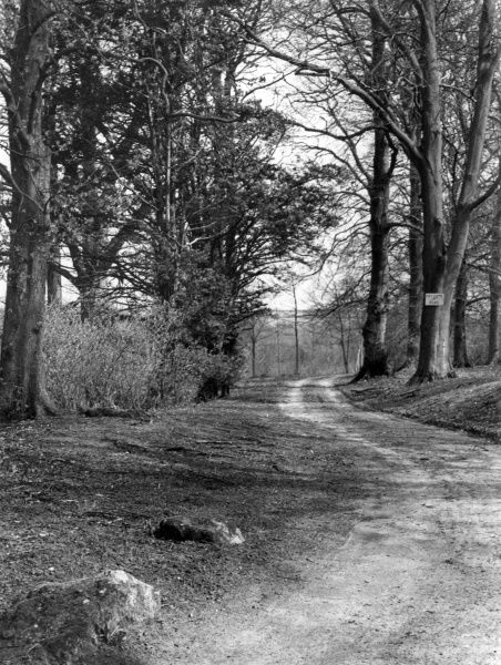 A trackway in Sarsgrove Wood, Oxfordshire, England, which formerly contained the stones which are now to be found on the pavement verge and elsewhere in Churchill village Date: 1930s