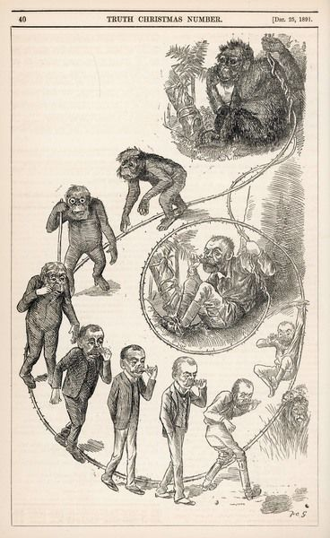 A Victorian representation of the ascent of man from ape